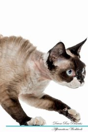 Devon Rex Affirmations Workbook Devon Rex Presents, Positivity Live