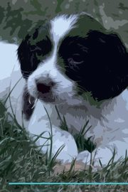 English Springer Spaniel Affirmations Workbook English Springer Spaniel Presents, Positivity Live